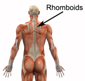 Rhomboids